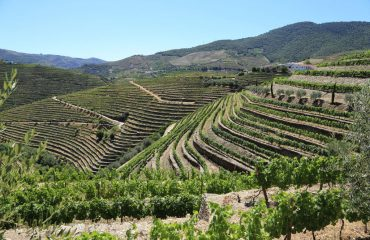 Douro Valley: Full Day Walking Tour